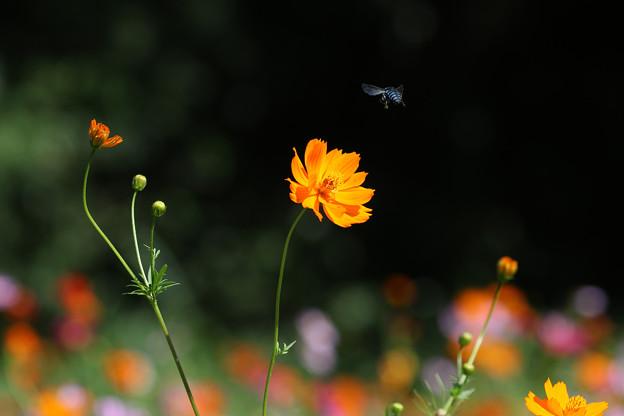 Blue Bee's Dream
