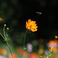 Photos: Blue Bee's Dream