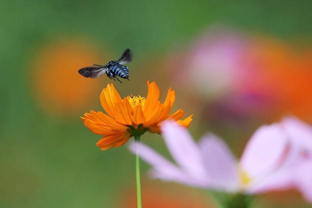 Blue Bees' Dream 2