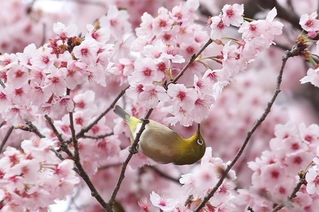 ♪春にゃのに~~