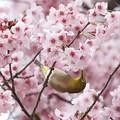 Photos: ♪春にゃのに~~