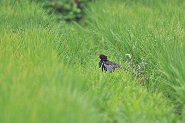 ♪私の好きな草原~