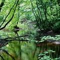 ♪森と、泉に..