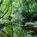 Photos: ♪森と、泉に..