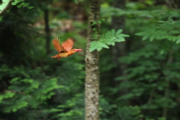 Photos: Flying キョロちゃん