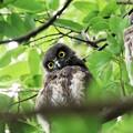 Photos: 森の木陰で