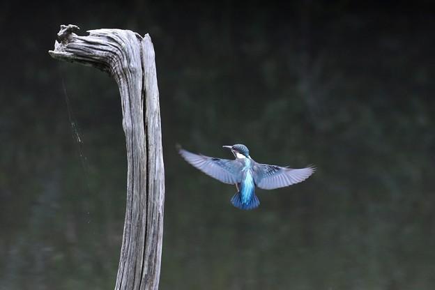 Photos: Blue Back