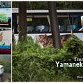 Photos: やまねこバス