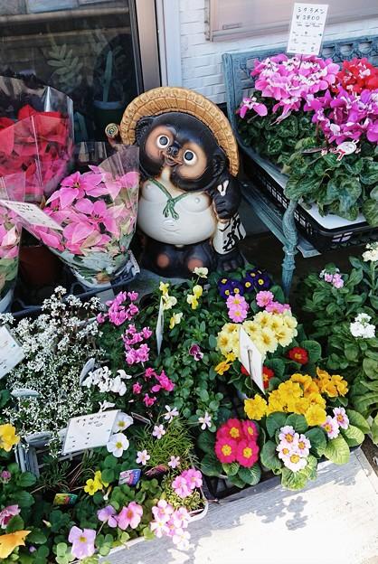 Photos: タヌコの花道