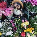 タヌコの花道