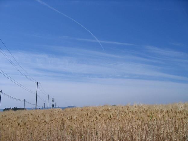 麦畑と青空