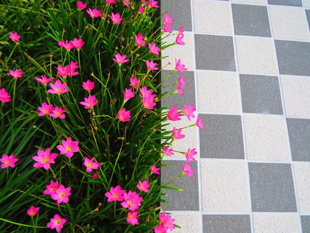 タイルと花