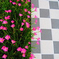 写真: タイルと花