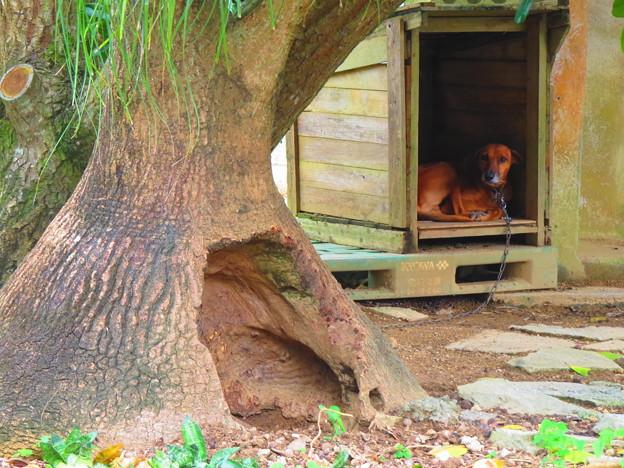 別荘はツリーハウス