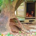 Photos: 別荘はツリーハウス
