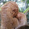 お猿さんが赤ちゃんを抱っこしている・・・じゃニャい