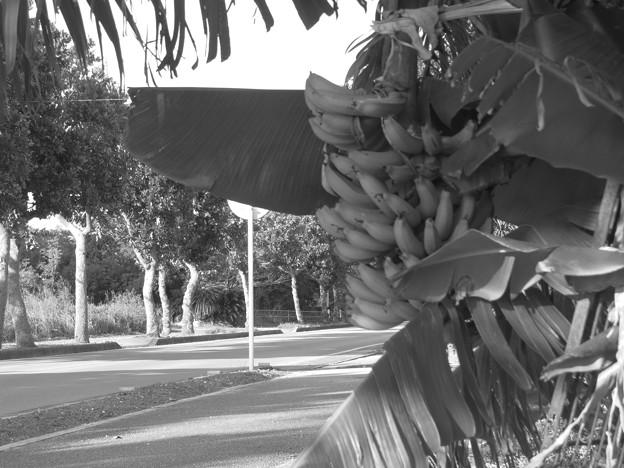 街路樹ばニャニャ