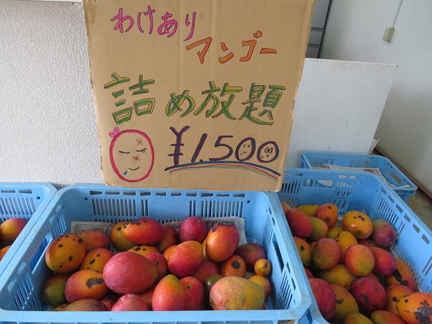 マンゴ-詰め放題