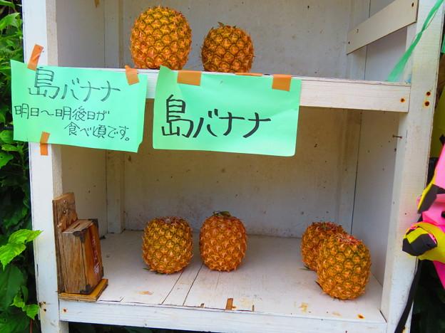 Photos: 島ばニャニャ?
