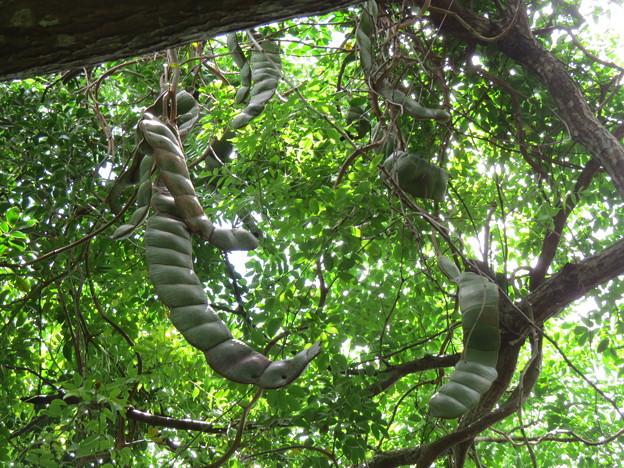 Photos: ジャックと豆の木