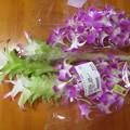 Photos: 花を買いに