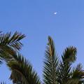 Photos: 椰子と月