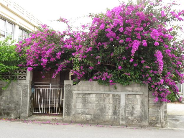 花のお家 III