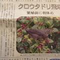 Photos: ブラックバ-ド