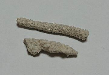 発掘 貝殻コレクション