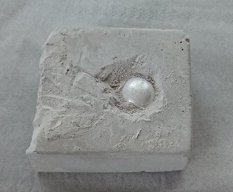 発掘シリーズ 貝殻セレクション