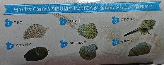 発掘シリーズ 貝殻セレクション2