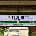 Photos: 向河原駅 Mukaigawara Sta.