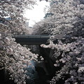 Photos: お花見2018.03.29神田川