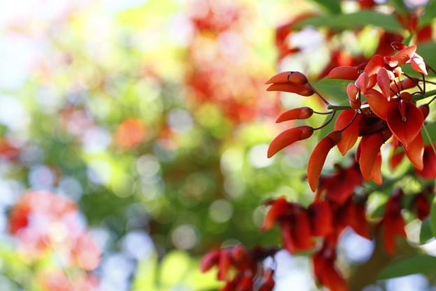 写真: 晴れた日の午後~~