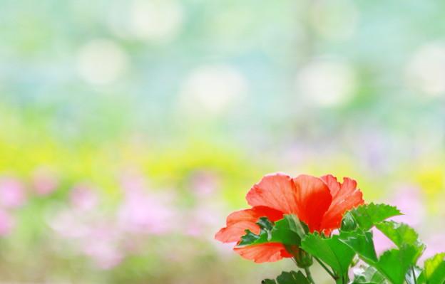 写真: 華を見る花~