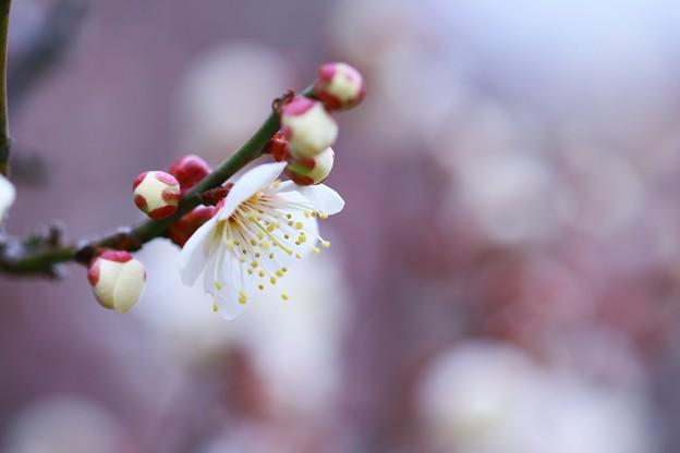 写真: 春色~~