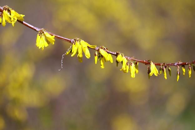 幸福の黄色い・・・・