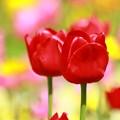写真: お花畑  (2)