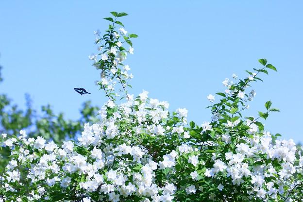 梅花空木と・・・