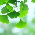 写真: 葉