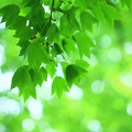 写真: グリーン~~