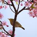 Photos: お花見日和・・・
