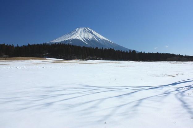 写真: 雪原のシルエット。
