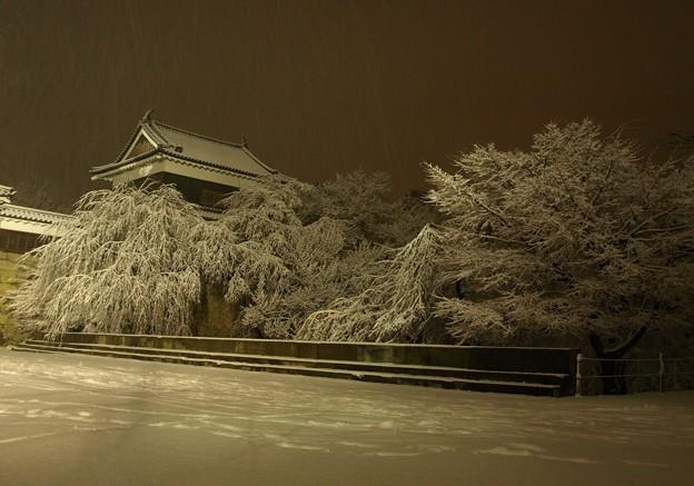 写真: しんしんの夜の上田城跡。