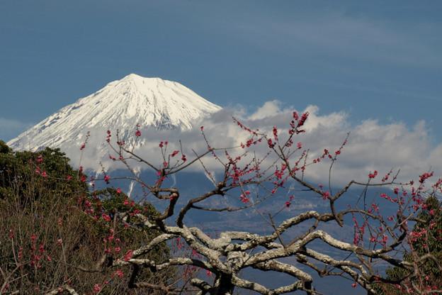 写真: 梅の花はまだかいな。
