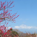 写真: 紅梅咲き伸びて。