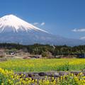 Photos: 菜の花日和。