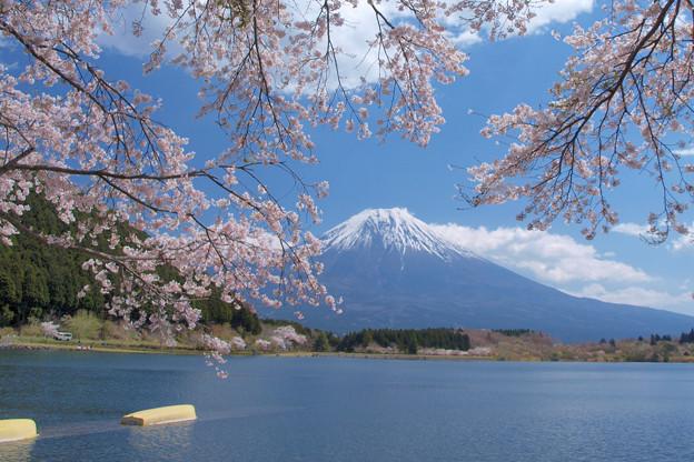 田貫湖に来た春。