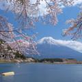 写真: 田貫湖に来た春。