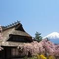 Photos: いやしの里に春の色。
